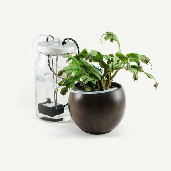 Hydtoplant